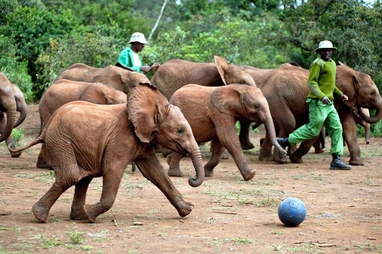 Sheldrick Elephant Orphanage - Nairobi National Park