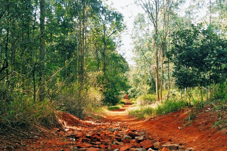 karura Forest Trail