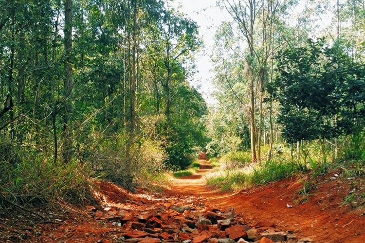 karura Forest Trail
