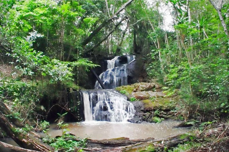 Karura Forest Waterfall